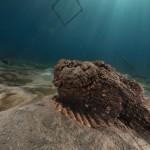 havdyr ved australiens vestkyst