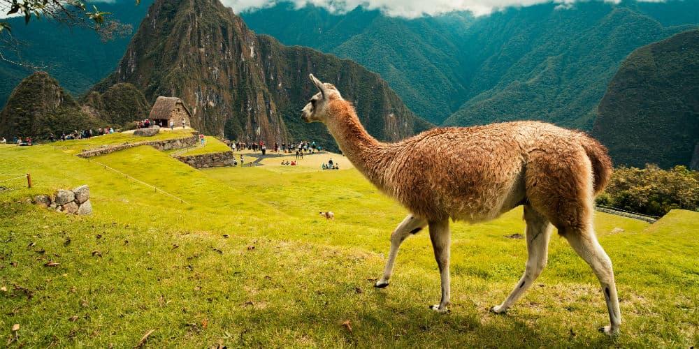 Tag på rundrejse i Peru og besøg det forladte inkarige, Machu Picchu